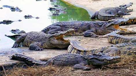 Cyprus crocodile park