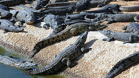 Proposed crocodile park in Cyprus
